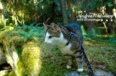 Katt på upptäcktsfärd