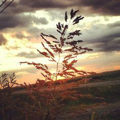 Just another glorious Louisiana sunset. #louisiana #sunset #portallen #westbatonrouge