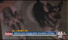 """According to Saturday's KSHB News, a retired veteran, who suffers from post-traumatic stress disorder, believes that his two German shepherds were stolen from his Kansas City, Missouri, yard this week.  On Wednesday night, the dogs, named """"Loki,"""" and """"Ella,"""" disappeared from Charles Quigley's fenced yard near 92nd and Wornall. Though the yard is surrounded by a wooden fence, the gate to the yard was not locked; Quigley does not believe that his dogs simply broke loose ..."""