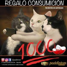 ¡Ya somos 1000 amigos en #Paddintom Café & Copas!  👫👬👭👫 GRACIAS por vuestra fidelidad, por seguirnos en redes sociales, y por supuesto por venir a vernos. 🥃🍺🍸🍷🍹🥂🍧 Habrá muchos más regalos más en consumiciones, pero no te olvides seguirnos en instagram y Facebook, y decirle a vuestros amigos que se unan y compartan nuestras publicaciones.  #verano2017 #verano #summer #grupodeamigos #venAverme #love #osqueremos #regalo #somos1000 #picoftheday #amigos #friends #salirenSevilla…