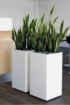 You will find some great office plants ideas for your working space here. We promise we did our best in finding you great office plants ideas… Plant Design, Garden Design, Landscape Design, Office Plants, Snake Plant, Interior Plants, Interior Design, Artificial Plants, Plant Decor