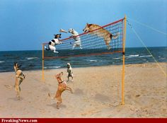 Dogs playing volleyball