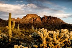 Vulture Peak's jagged profile glowing in the sunset light is a dramatic sight rising above the Arizona desert. Walking up the eroded remains of an ancient volcano, hikers are treated to stunning views and curious rock formations along the trail. If...