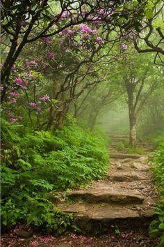 Waldweg mit Stufen, Farn und Blüten