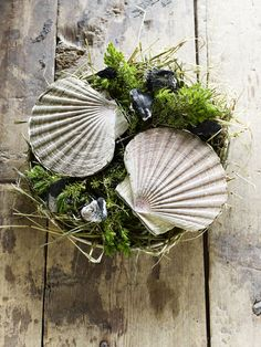 Scallops cooked over burning Juniper Branches I Faviken Magasinet #Scandinavia #Restuarant I http://www.favikenmagasinet.se/