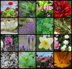 50 Deer Resistant Flowers and Plants...unless they get hungry enough