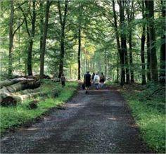 Door de bossen rond Hotton : Wandelen : Pasar vzw