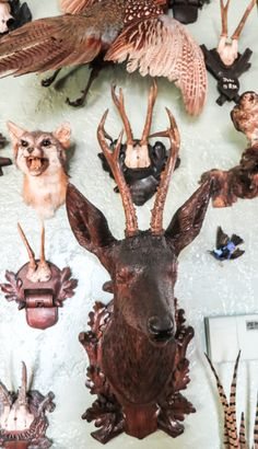 In stiff company Taxidermy Display, Antler Crafts, Deer Skulls, Animal Magic, Black Forest, Natural History, Antlers, Art World, Stuffed Animals