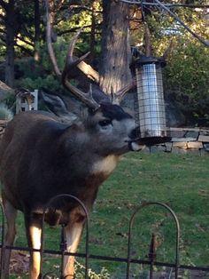 Backyard buddy!