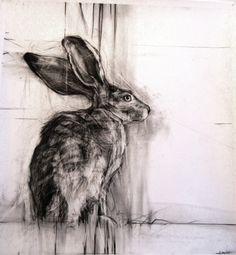 April Coppini - Rabbit                     Drawings: Charcoal