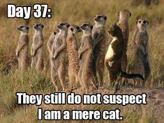 A mere cat... - Imgur