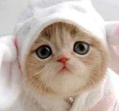 This little kitten makes me smile
