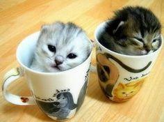 little cats little cups