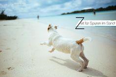 Kroatien Urlaub mit Hund | Einreisebestimmungen