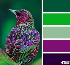 CHAMELEON. Color Palette. More