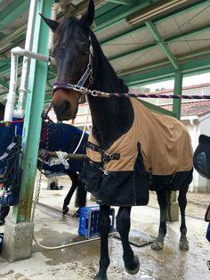 Orangepekoe, dalle 11:00 al 17 febbraio 2016 per il corso II con istruttore Toyoshima e gli altri 5 cavalli; Leone, Ramses, Noir, Fuji, Jahan. Pekoe era il secondo dall'ultimo e non andava bene come sempre il galoppo a sinistra.