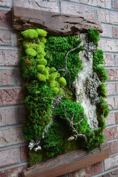 Indoor Gardens For Your Home Succulent Wall Art, Plant Wall, Plant Decor, Moss Wall Art, Moss Art, Moss Garden, Garden Art, Vertikal Garden, Indoor Gardening Supplies