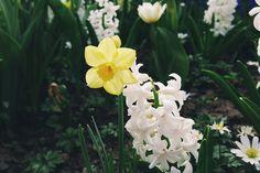 Fiore giallo e bianco