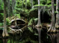 Pando Is Located In The Fishlake National Forest Near Fish Lake At The Western Edge Of The