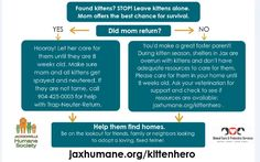 Did you find a litter of kittens? We have a wide variety of resources, videos, article and input to help you care for orphaned kittens. Animal Shelter, Animal Rescue, Feeding Kittens, Great Fosters, Kitten Care, Foster Mom, Outdoor Cats, Feral Cats, Foster Parenting