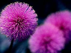 amazing flowers - Google Search