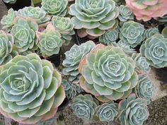 Best Plants to Give as Gifts