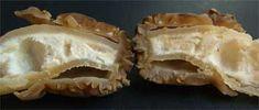 false morel - verpa bohemica -cross section