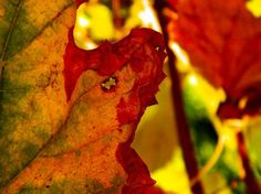 The autumn Photo by Popescu Sergiu Valentin -- National Geographic Your Shot