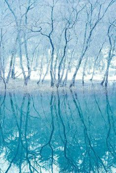 Forest on the mirror , Hokkaido , Japan