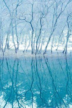Forest on the mirror , Hokkaido , Japan