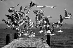Gulls On Warf Fly by pauludowiesner on DeviantArt Gulls, Beautiful World, Worlds Largest, Pet Photos, Deviantart, Wall Art, Pets, Artist, Pictures