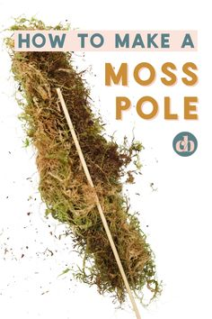 When you're a collector of epiphytic plants like Monsteras, Syngoniums, Hoyas, and some Philodendrons, using a moss pole can help your plants to grow big and strong. Moss poles mimic mossy trees, and in their natural environment, epiphytes grow on the trunks of trees and other plants. Make this mini moss pole DIY in just minutes! #mosspole #houseplants