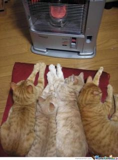 Kitties In The Winter