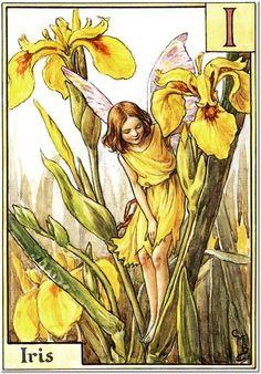 Cicely Mary Barker - The Flower Fairy Alphabet - The Iris Fairy Painting