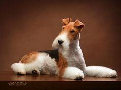 Fox Terriers, Perro Fox Terrier, Wirehaired Fox Terrier, Welsh Terrier, Terrier Breeds, Wire Fox Terrier, Puppy Breeds, Wire Haired Terrier, Expensive Dogs