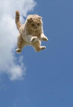 Wee!! Life seems to be fun for this kitty!