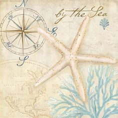 Nautical+Shells+I