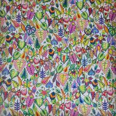 #magicaljungle #johannabasford…  Davlin Publishing #adultcoloring
