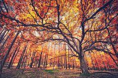 ~ Southern Autumn ~