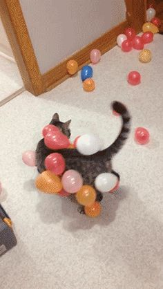 kitten and balloons p.2
