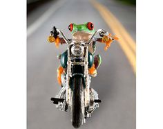 Motorcycle Harley LIVE Frog on Motorcycle Harley by FrogFun