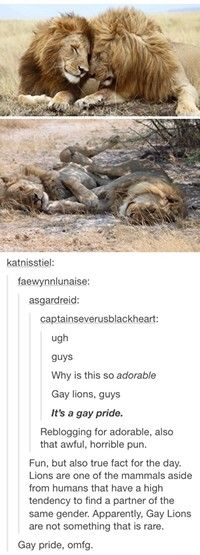 Lions except this. Why can't we?