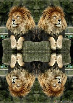 ✯ The Lion Pairs ✯