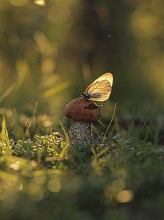 O Cogumelo e a Borboleta…