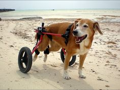 Rear Support Dog Wheelchair | K9 Carts The Pet Mobility Experts $225