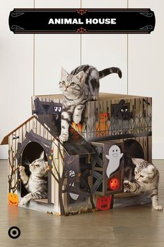 Cats and Halloween Animals And Pets, Baby Animals, Cute Animals, Cute Kittens, Cats And Kittens, Crazy Cat Lady, Crazy Cats, Hallowen Ideas, Cat Room