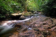 Khao Phra Thaeo Wildlife Conservation Development #Thailand