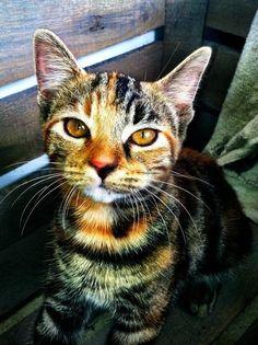 Uniquely colored cat... Whoa