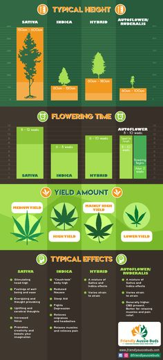 Weed Facts, Medical Marijuana, Growing Weed, Growing Herbs, Cannabis Cultivation, Cannabis Plant, Tricks, Health And Fitness, Herbs