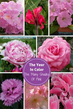Learn about the role that the color pink can play in your garden. Find out the pink flowers and plants that you can grow year round to have pink in your garden.